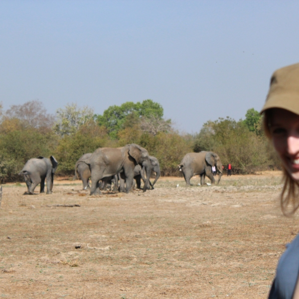 Elephant Viewing